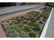 extenzivní střešní zahrada